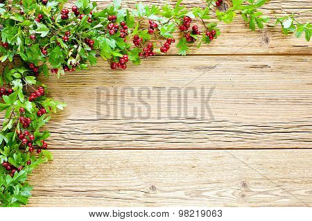 Hawthorn At Bright Planks