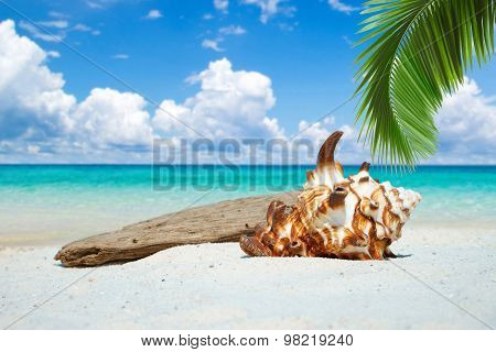 Seashell And Drift Wood On The Beach