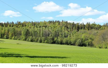 Norwegian woods and fields in the summer