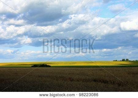 beautiful summer landscape, village wheat field