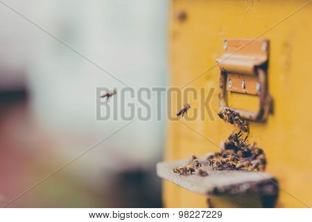 Honey bees flying around their beehive