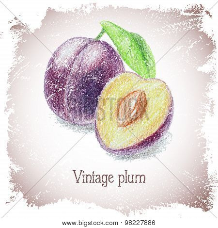 Vintage card with plum.