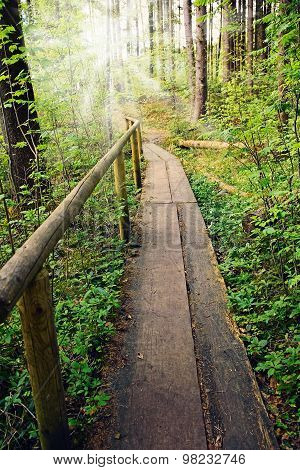 Wooden Boardwalk In The Forest With Sunshine