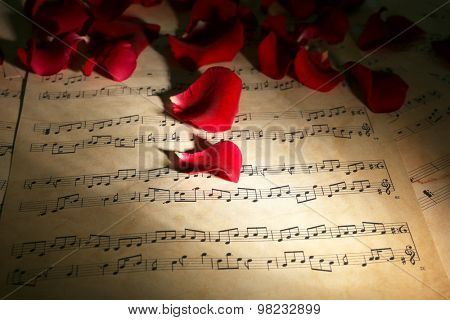 Beautiful rose petals on music sheets, closeup