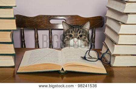 Grey Cat Sits At A Table And Watch The Book