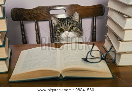 Grey Cat And Books