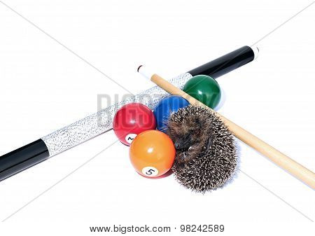 Forest wild hedgehog and billiard accessories isolated