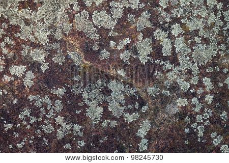 Lichen Growing On Stone Surface