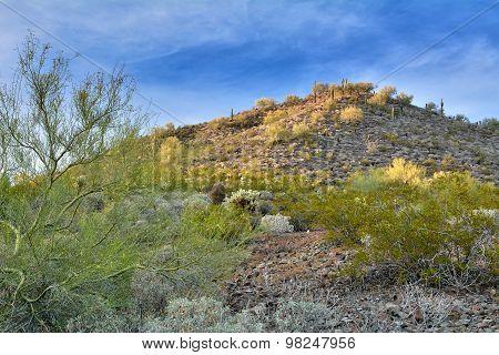 The Golden Spring Desert