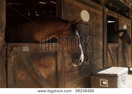 Brown bay horse in a barn