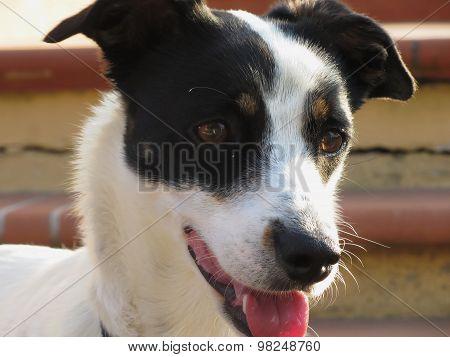 Dreamy Dog Puppy Closeup