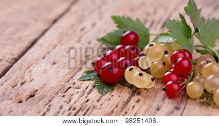 red and white currant