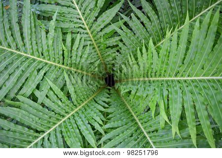 Top Circle roll Green leaf fern abstract background