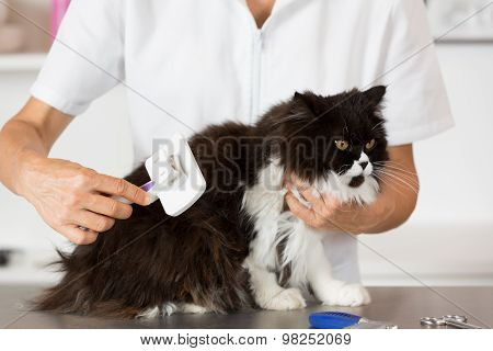 Cat At The Hairdresser