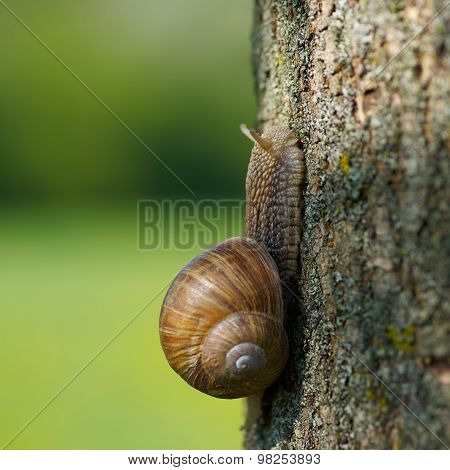 Snail In The Garden On A Tree