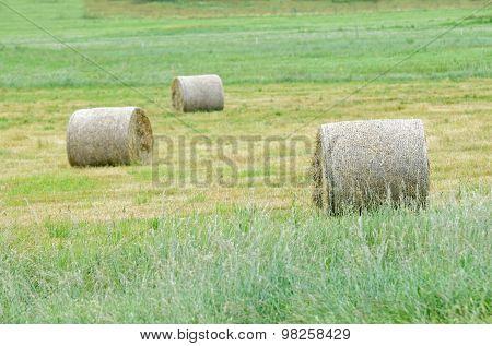Three Hay Rolls On A Field