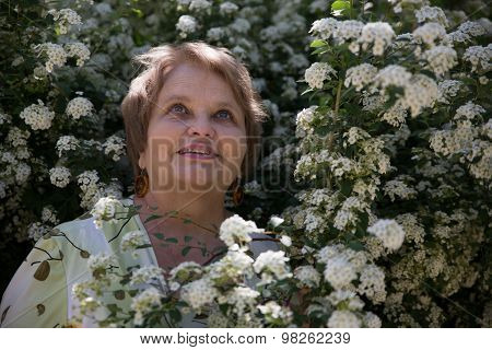 Senior woman looking up under white flower of Spiraea shrub in a garden