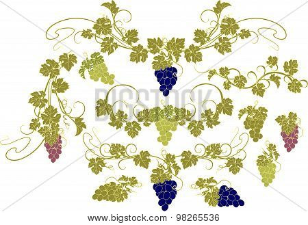 Design elements with bunches of grapes and vines in vintage style.