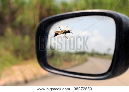 Mud dauber wasp standing on car window