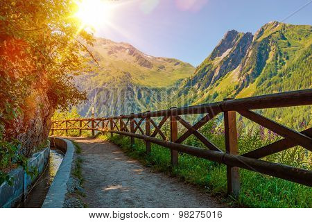 Swiss Alps Sunny Trail