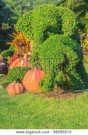 Elephant bonsai tree in the garden.