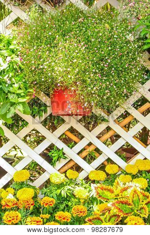 Beautiful flower garden.