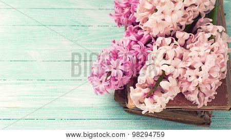 Fresh Pink Hyacinths