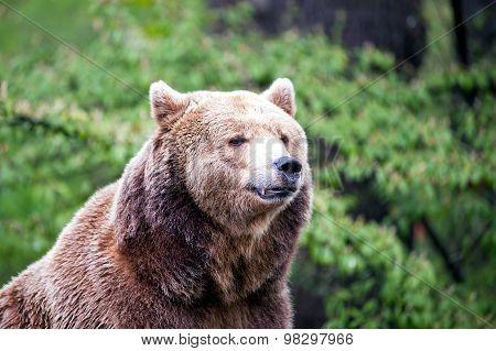 Watching Brown Bear