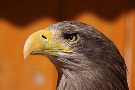 image of eagles  - White - JPG