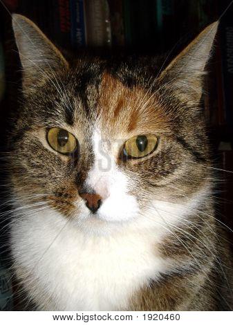 The Cat'S Portrait