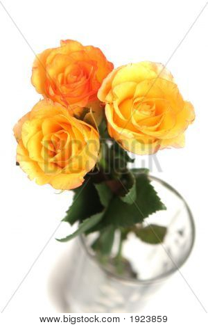 Three Yellow Roses On A White Background