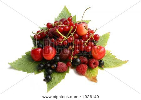 Forest Berries On The Leaves