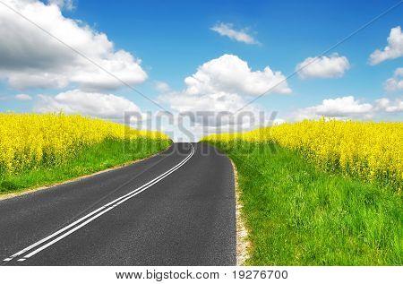 Road between fields of oilseed rapeseed