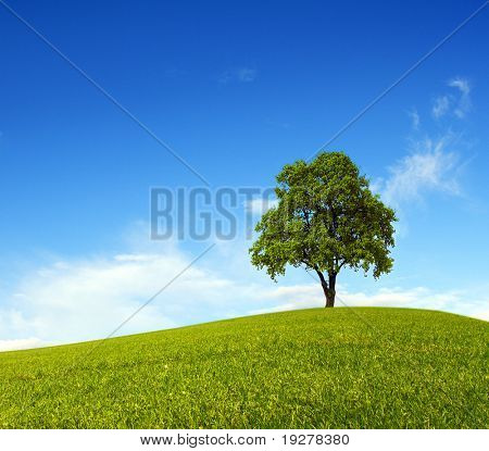 Single tree on hill and blue sky