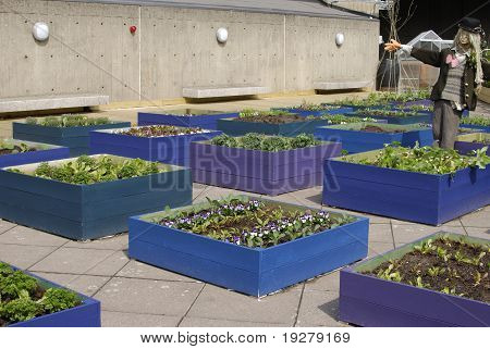 Rooftop Garden. London. England