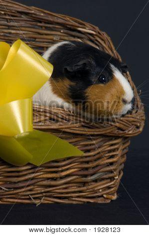 Pig In A Basket