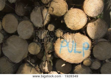 Pulp Wood Logs