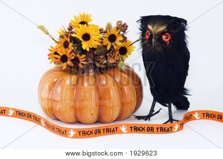 Pumpkin With Owl Flowers And Trick Or Treat