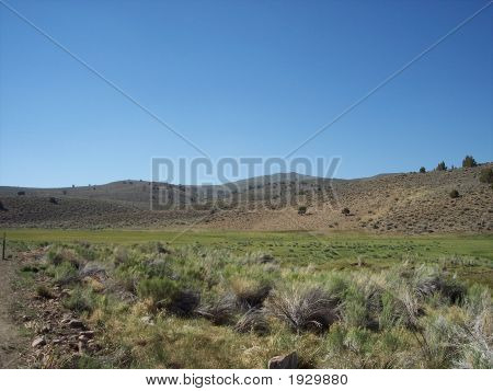 Lanscape Image. The Bodie Grassland