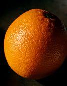Orange Portrait poster