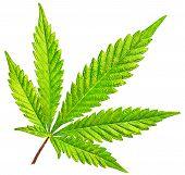 Isolated 5 Tip Marijuana Leaf 01 poster