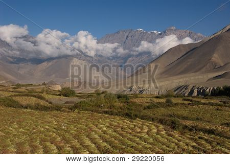 Jhong Khola Valley Fields