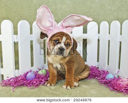 Pascua divertidos Bulldog