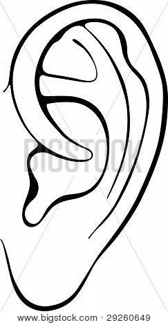 menschliche Ohr