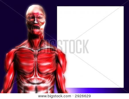 Muscles With Blank Area