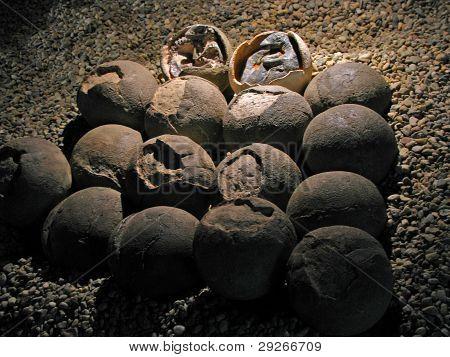 Dinosaurier Eier