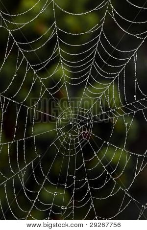 The spider's web of a spider in the morning dew. Photo icon for network and networking.