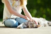 Cute Young Girl With Her Cat On Sunny Autumn Day. Adorable Child Petting Her Kitty. Kids And Animals poster