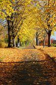 Walkway Autumn Season Alley Walkway In Yellow Colors. poster