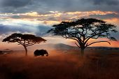 Wild African Elephant In The Savannah. Serengeti National Park. Wildlife Of Tanzania. African Landsc poster